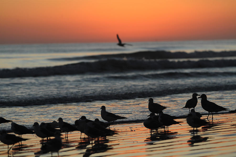 Beach Photograph - Birds of a Feather by Jose Rodriguez