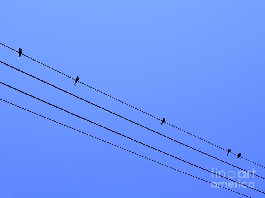 Birds Photograph - Birds On A Wire by Yali Shi