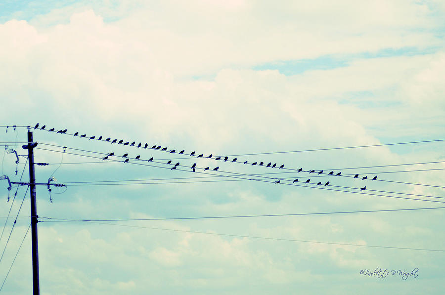 Nature Photograph - Birds On Wires Blue Tint by Paulette B Wright