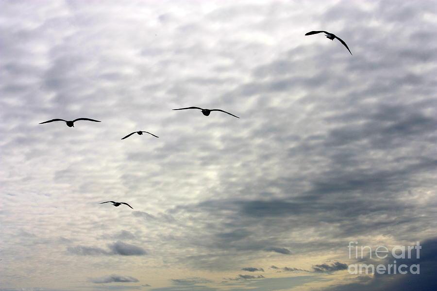 Ocean Beach Birds San Francisco