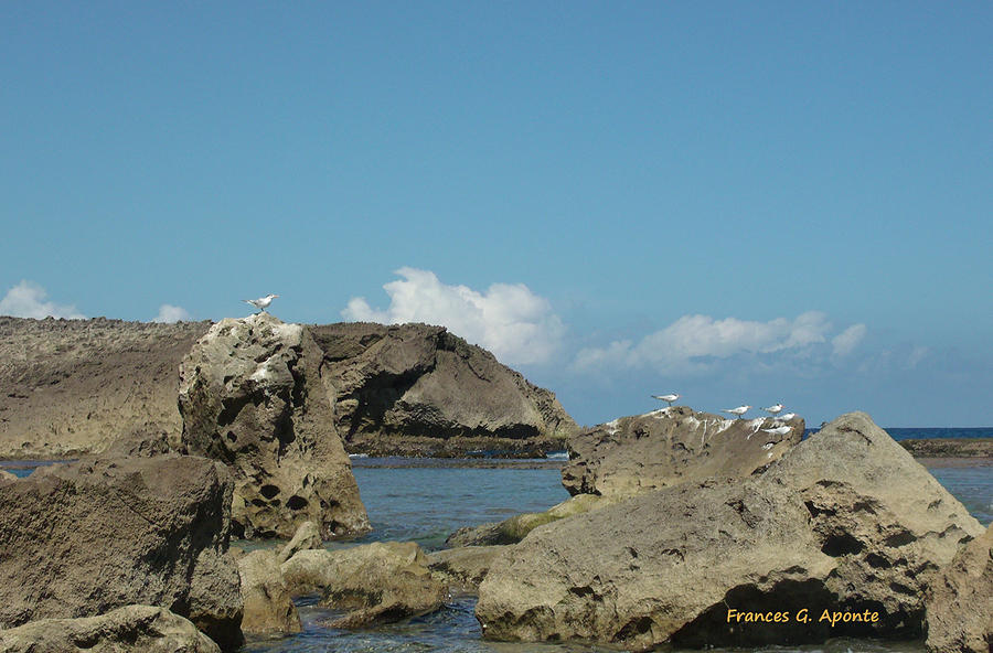 Landscape Photograph - Birds Over The Rock by Frances G Aponte