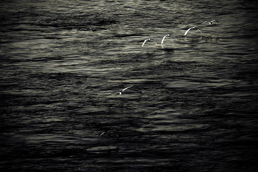 Birds Photograph - Birds Returning Home by Gabriel  Cusmir