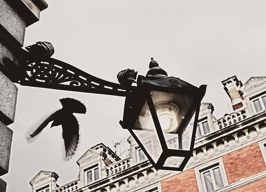 London Photograph - Birds View by JAMART Photography