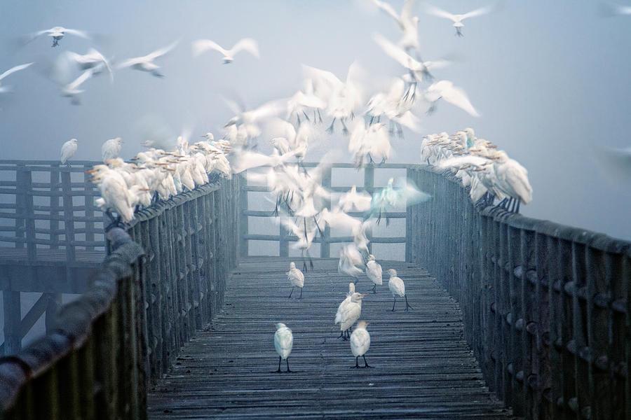 Horizontal Photograph - Birds by Zu Sanchez Photography