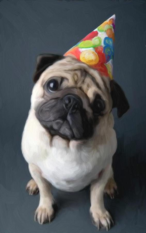 Dog Painting - Birthday Boy by Snake Jagger