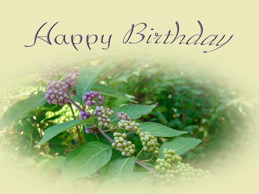 Birthday Greeting Card American Beautyberry Shrub Photograph by – Nature Birthday Card