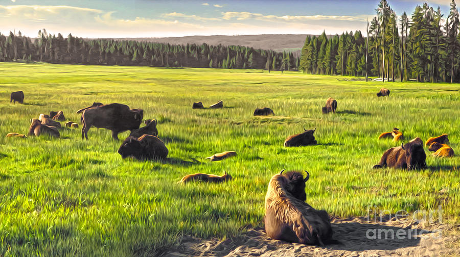 Bison Painting - Bison Herd In Yellowstone by Gregory Dyer