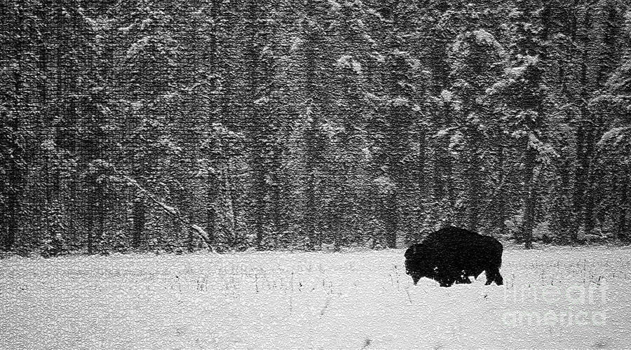 Animal Photograph - Bison In Snow Mosaic by Barry Shaffer