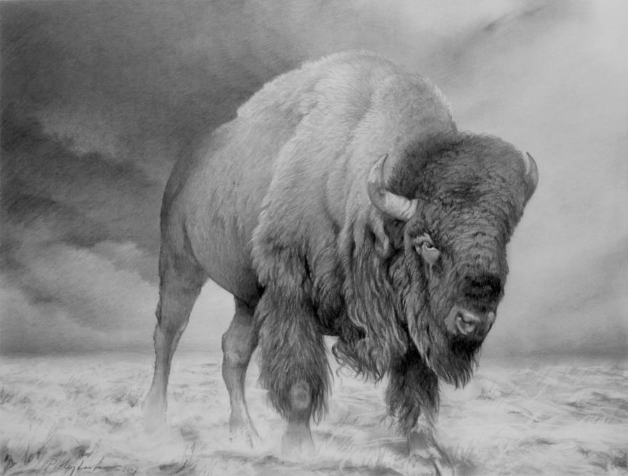Bison Drawing by Peter Heydeck