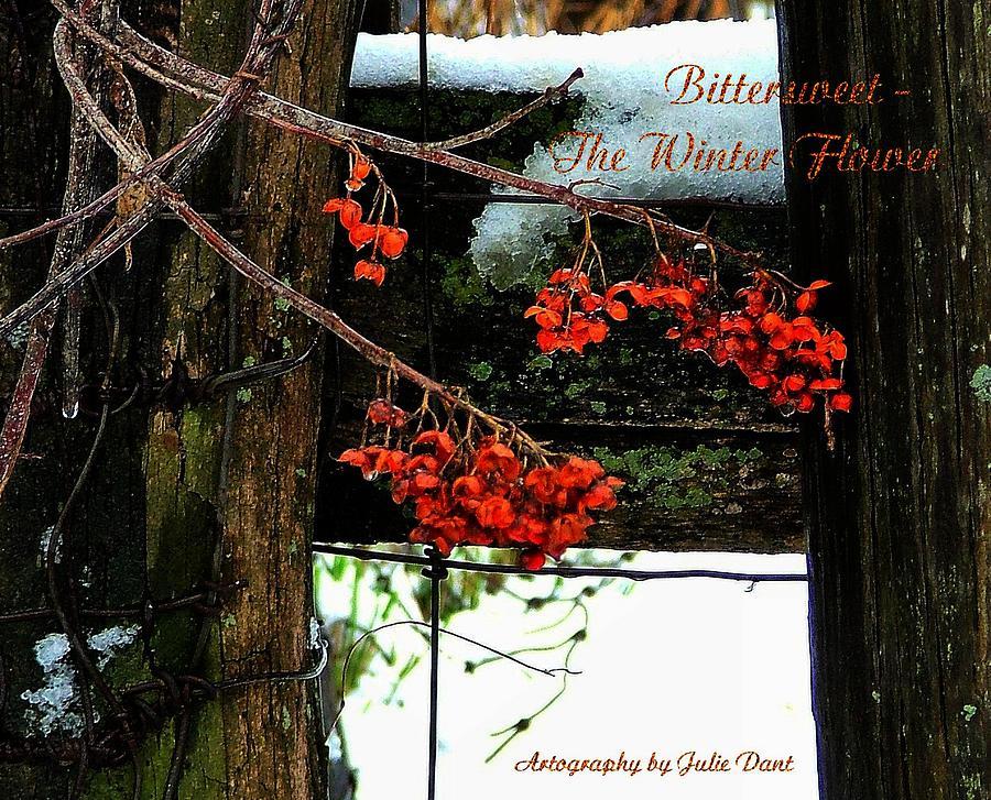 Bittersweet Photograph - Bittersweet The Winter Flower by Julie Dant
