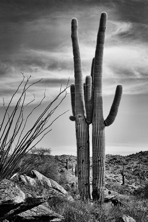 Saguaros Photograph - Black And White Couple by Kelley King