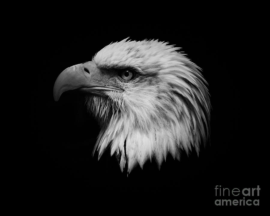Black And White Photograph - Black And White Eagle by Steve McKinzie