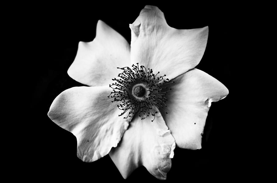Black And White Flower Photograph By Mirko Chessari