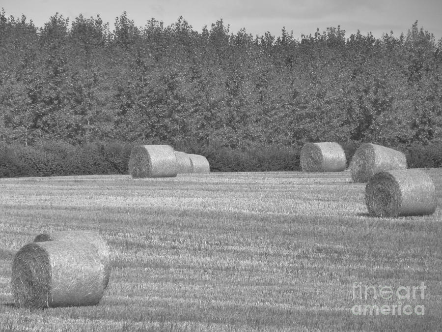 Round Hay Bales Photograph - Black And White Hay Bales by Andrew May