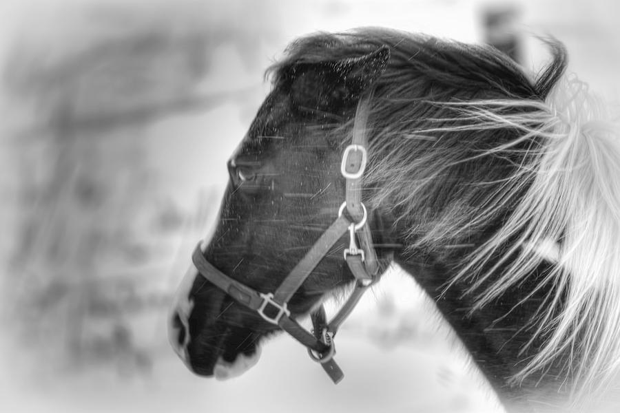 Horse Photograph - Black And White Horse Portrait by Gary Smith