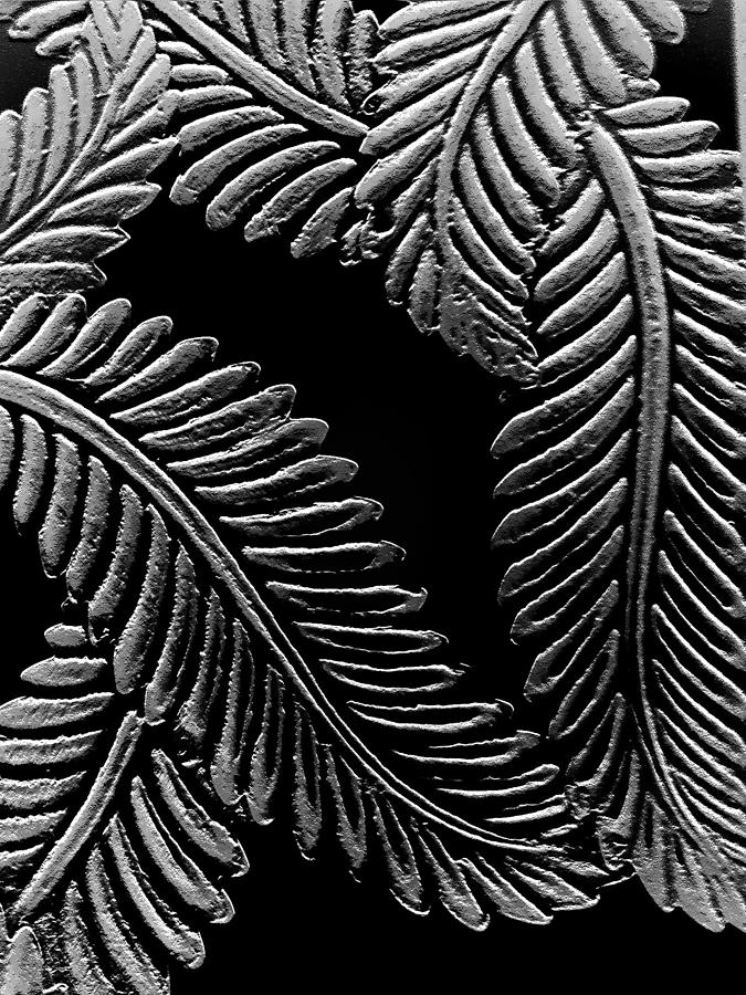 Digital Photograph - Black And White Leaves by Tanya Moody