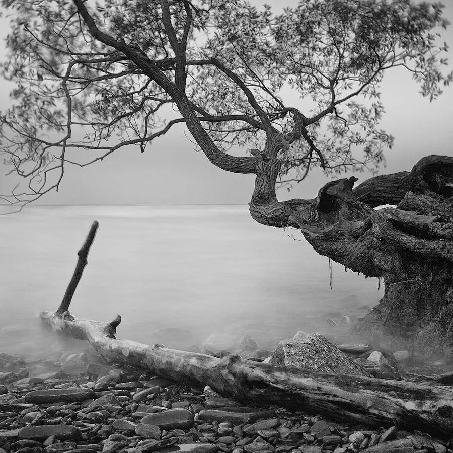 Tree Photograph - Black And White Mystic Lake by Andre Distel