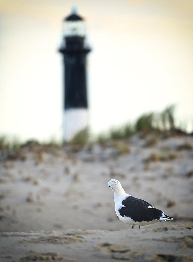Fire Island Photograph - Black And White On The Beach by Vicki Jauron