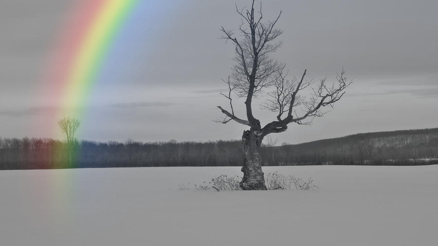 Black And White Rainbow Photograph By Timothy Thornton