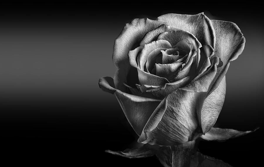Rose photograph black and white rose by naman imagery