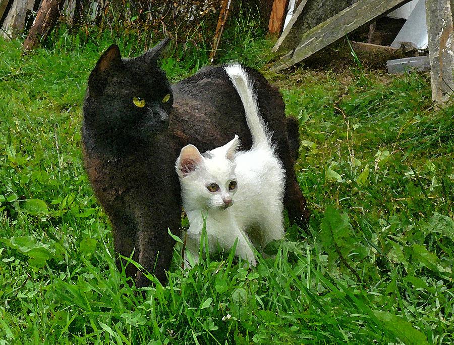 Black Cat Defends His White Kitten Photograph By Aleksandr Volkov