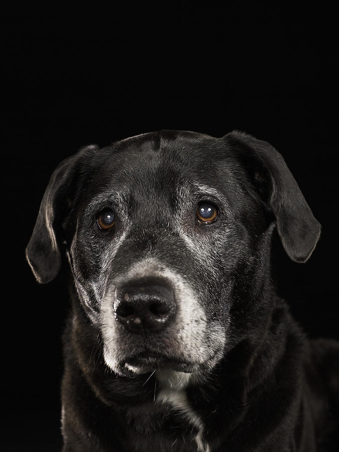 a look at the dog breed labradors Breed compatibility match guide will fido get along with lassie  your existing dog and new addition should be sterilized to have one or both dogs intact, is more likely to prevention is better than cure with cross breeds, look at each breed.