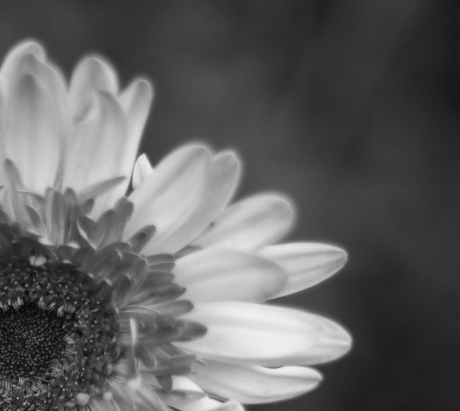 Sunflower Photograph - black N white by Kirit Prajapati