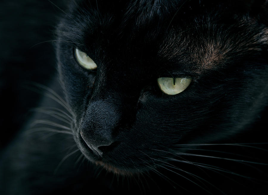 Black Photograph - Black Panther by Laura Melis