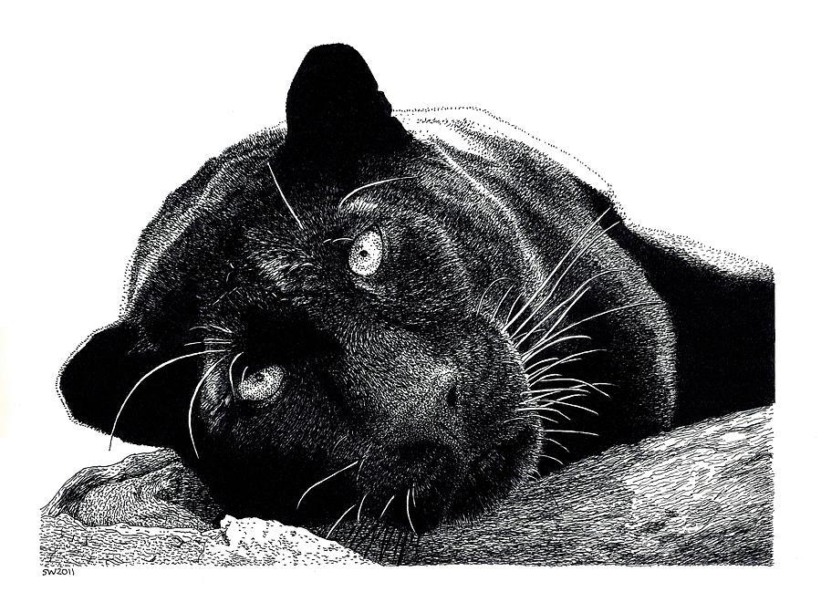 Black Panther Drawing By Scott Woyak