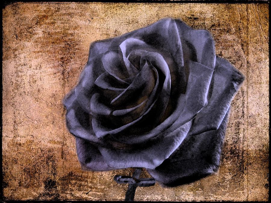 Rose Photograph - Black Rose Eternal   by David Dehner