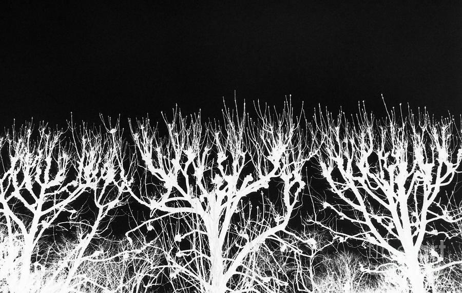 Trees Photograph - Black Sky Seine Trees by Tamarra Tamarra