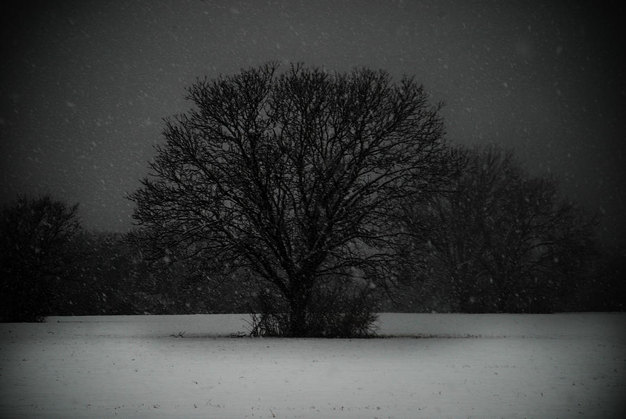 Dallas Texas Photograph - Black Snow Tree by Sonja Quintero