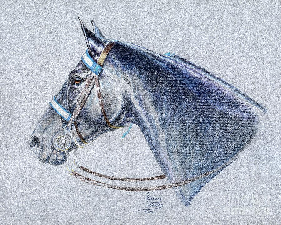 Colored Pencil Drawing - Black Tennessee Walker by Carrie L Lewis