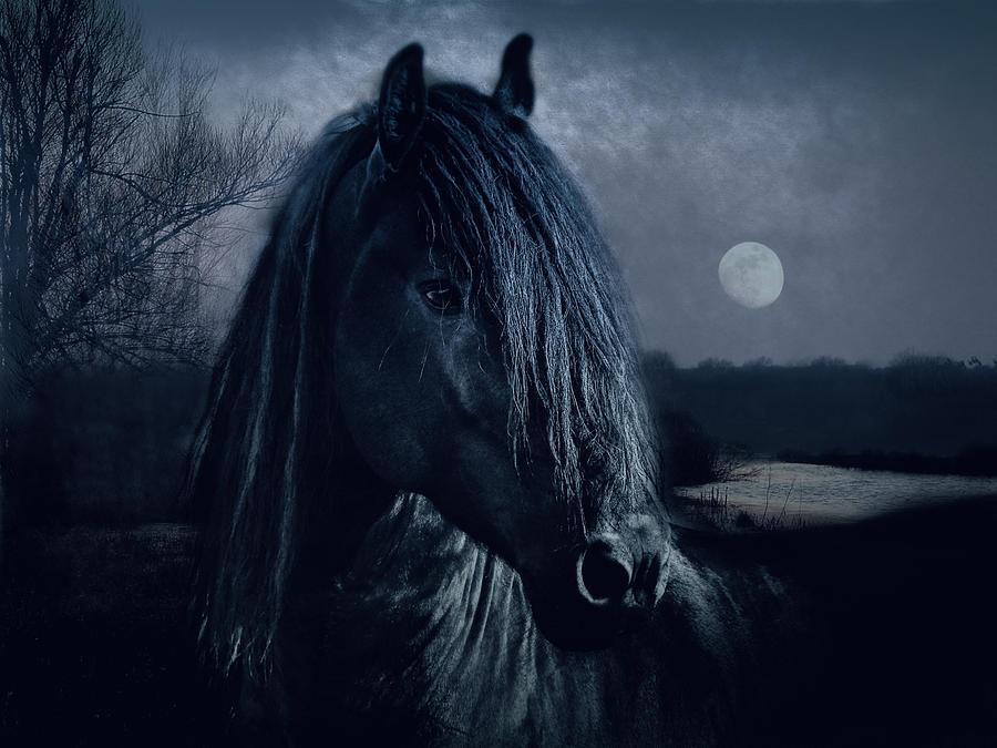 Animals Photograph - Black Thunder by Joachim G Pinkawa