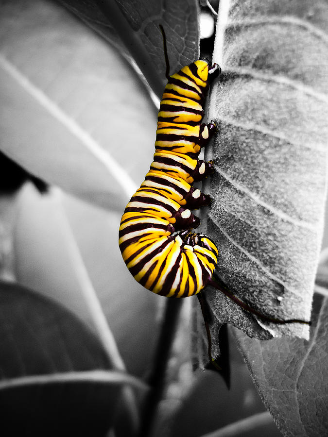 Black And White Photography With Yellow Color Splash Black White And Yellow...