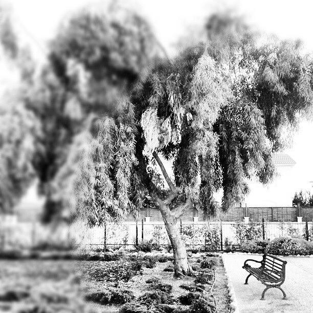 Blackandwhite Photograph - #blackandwhite #bnw #bw #trees #chair by Abdelrahman Alawwad