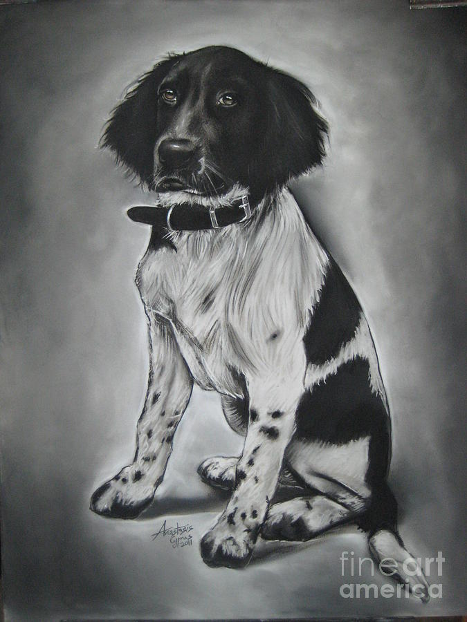 Dog Drawing - Blacky by Anastasis  Anastasi