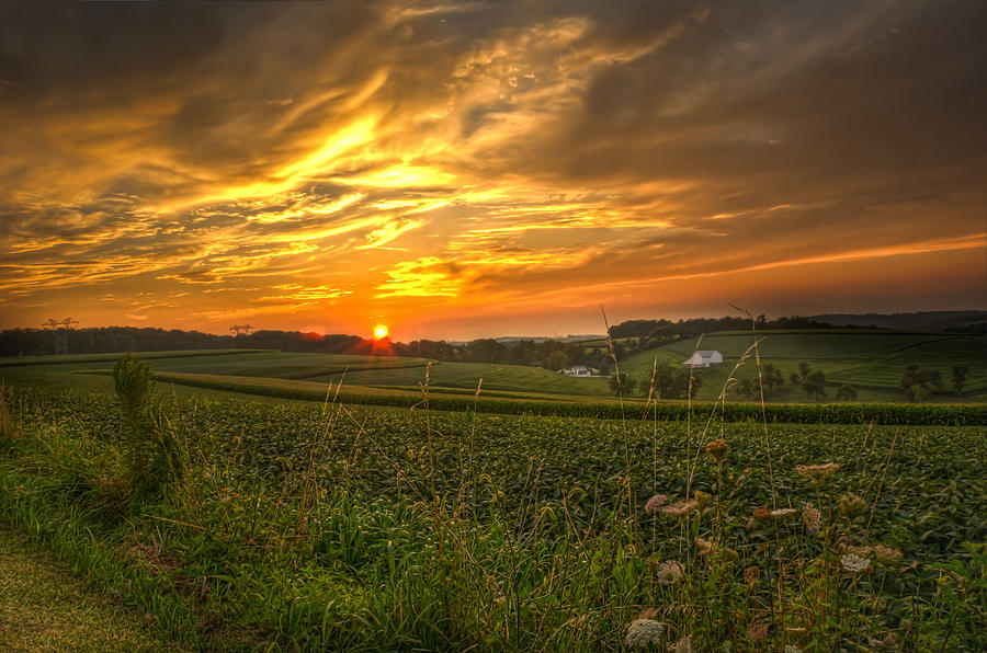 Landscape Photograph - Blazing Countryside by Robert Brown