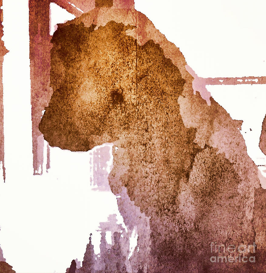 Dog Photograph - Blind Dog Winston by Christine Segalas