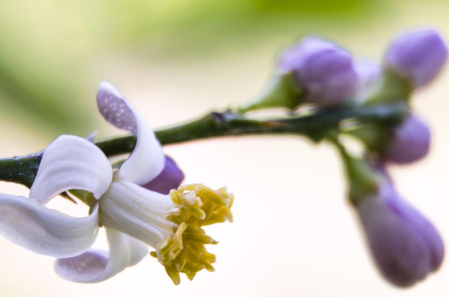 Bloom Photograph
