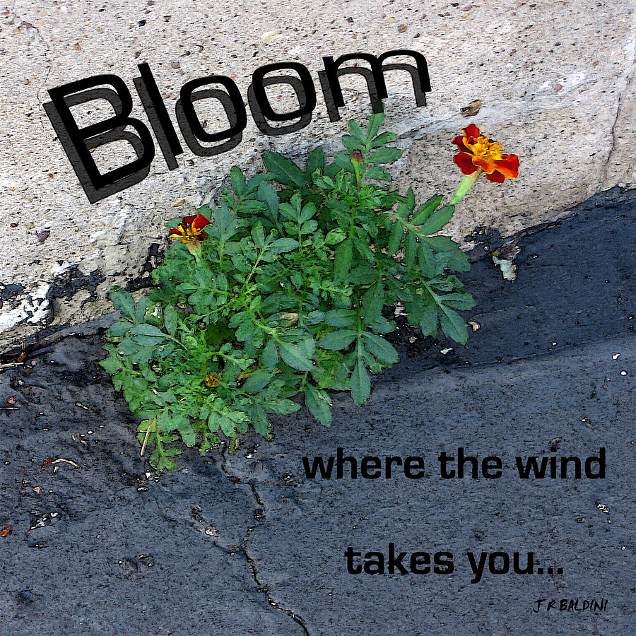 Inspirational Quotes Photograph - Bloom Where The Wind Takes You by J R Baldini