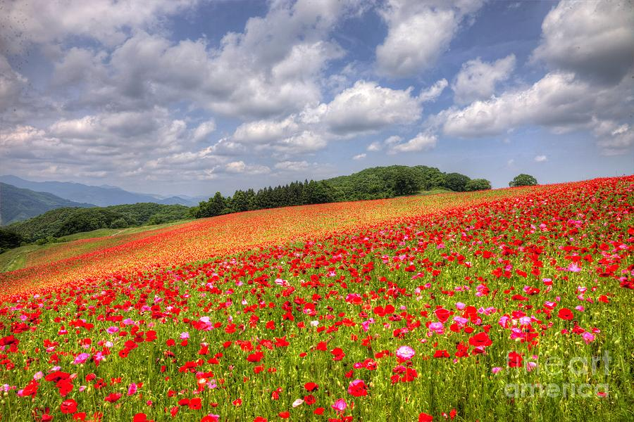 Nature Photograph - Blooming In The Plateau by Tad Kanazaki
