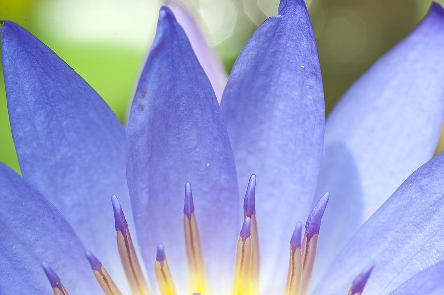 Abstract Photograph - Blooming Lotus by Maratsavalai Lertsirivilai