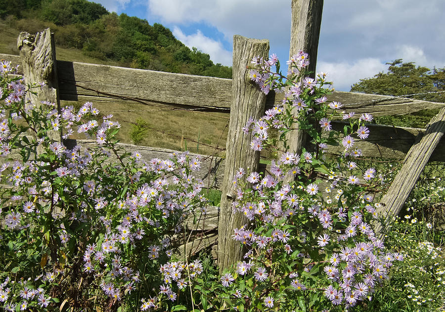 Fence Photograph - Blooming Season by Victoria Ashley