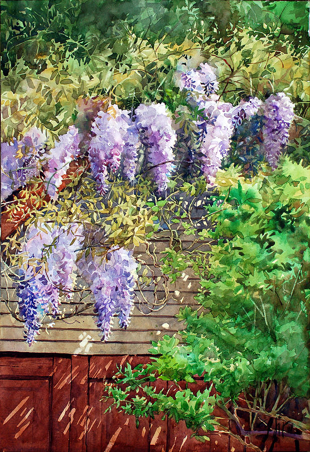 Peter Sit Watercolor Painting - Blooming Wisteria by Peter Sit
