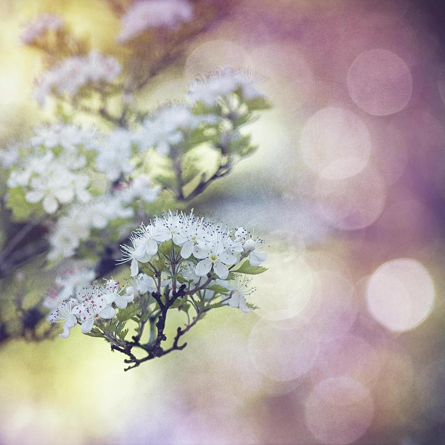 Blossom Mixed Media by Joel Olives