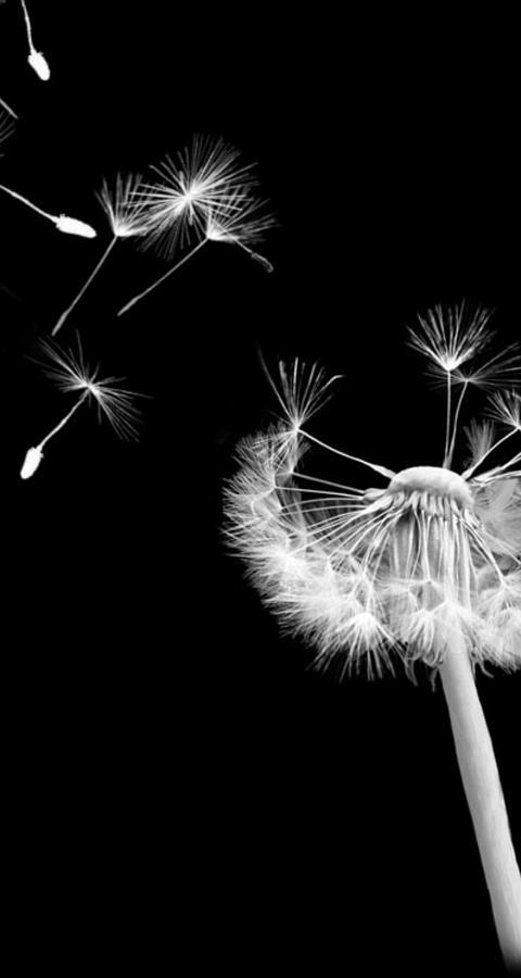 Wind Digital Art - Blown Away by Rhonda Barrett