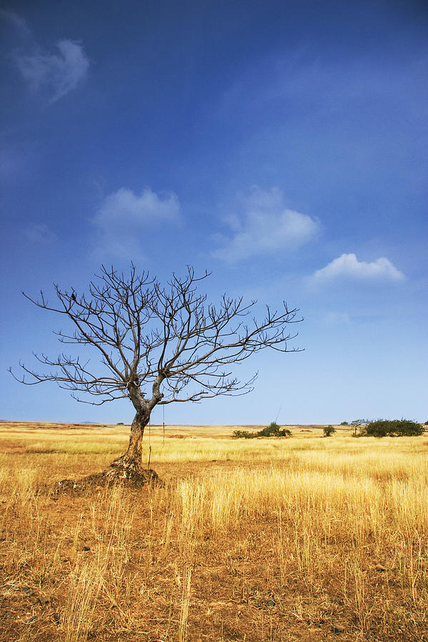 Tree Photograph - Blue And Gold by Sydney Alvares