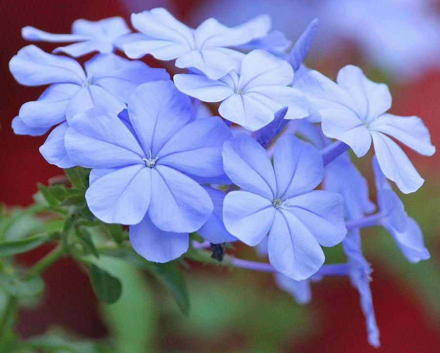 Becky Photograph - Blue Beauty by Becky Lodes
