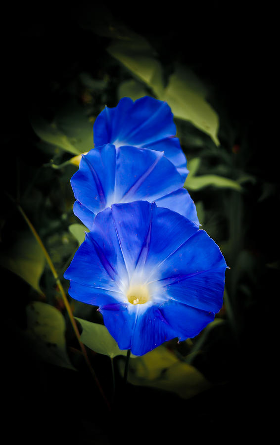 Morning Photograph - Blue Beauty by Swift Family